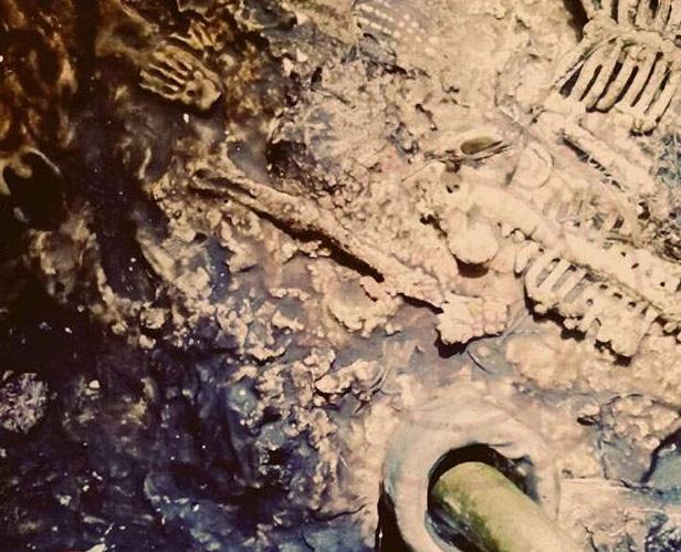 8465 - Altın Boynuzun Sırrı ve Gizli Hakasya Raporu