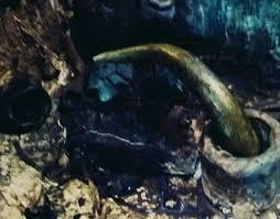 images - Altın Boynuzun Sırrı ve Gizli Hakasya Raporu