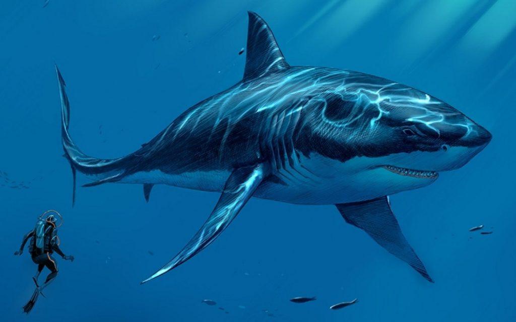 1440x900 1024x640 - Megalodon Dev Köpekbalığı Canlanıyor mu? (Teoriler ve Belgeler)