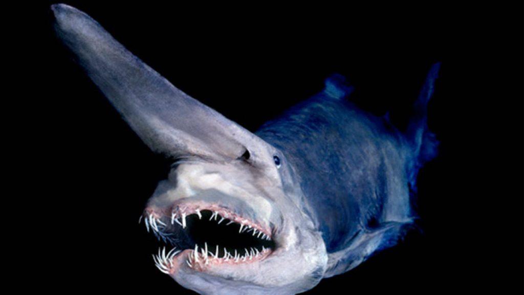 2 1024x576 - Megalodon Dev Köpekbalığı Canlanıyor mu? (Teoriler ve Belgeler)