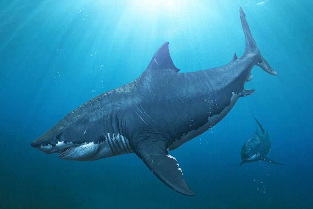 29dc6412ec0e9126d724ca86f9f114b0fd9544aa 1024x683 - Megalodon Dev Köpekbalığı Canlanıyor mu? (Teoriler ve Belgeler)