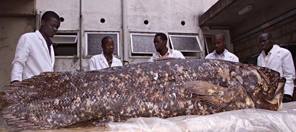 3683861 orig - Megalodon Dev Köpekbalığı Canlanıyor mu? (Teoriler ve Belgeler)