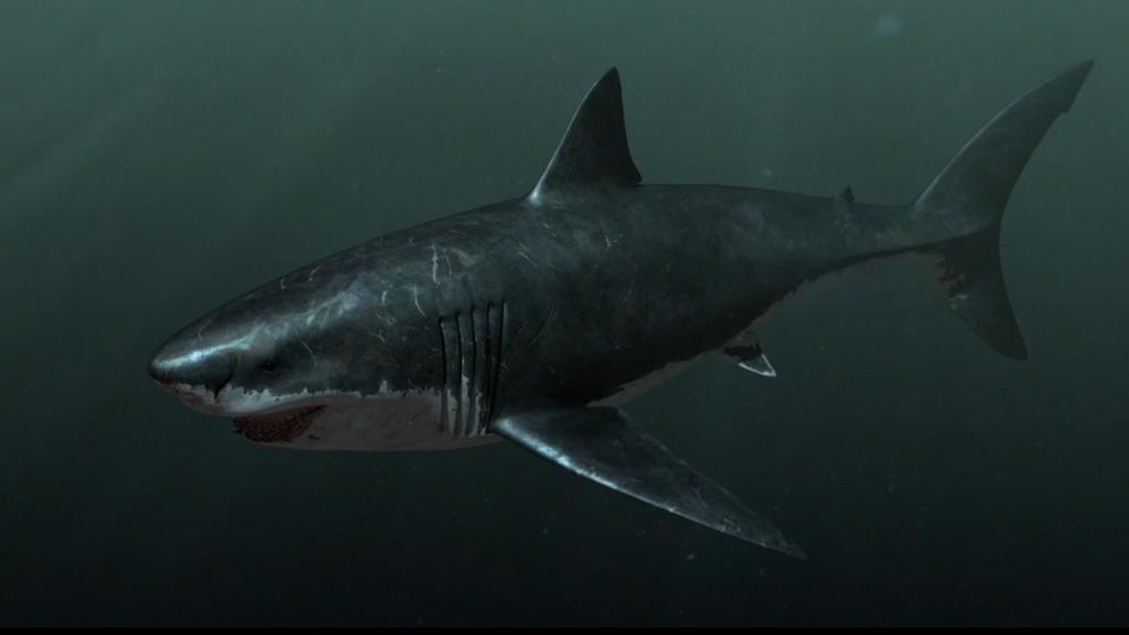 6 1024x576 - Megalodon Dev Köpekbalığı Canlanıyor mu? (Teoriler ve Belgeler)