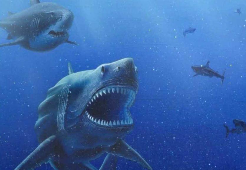 C. Megalodon - Megalodon Dev Köpekbalığı Canlanıyor mu? (Teoriler ve Belgeler)