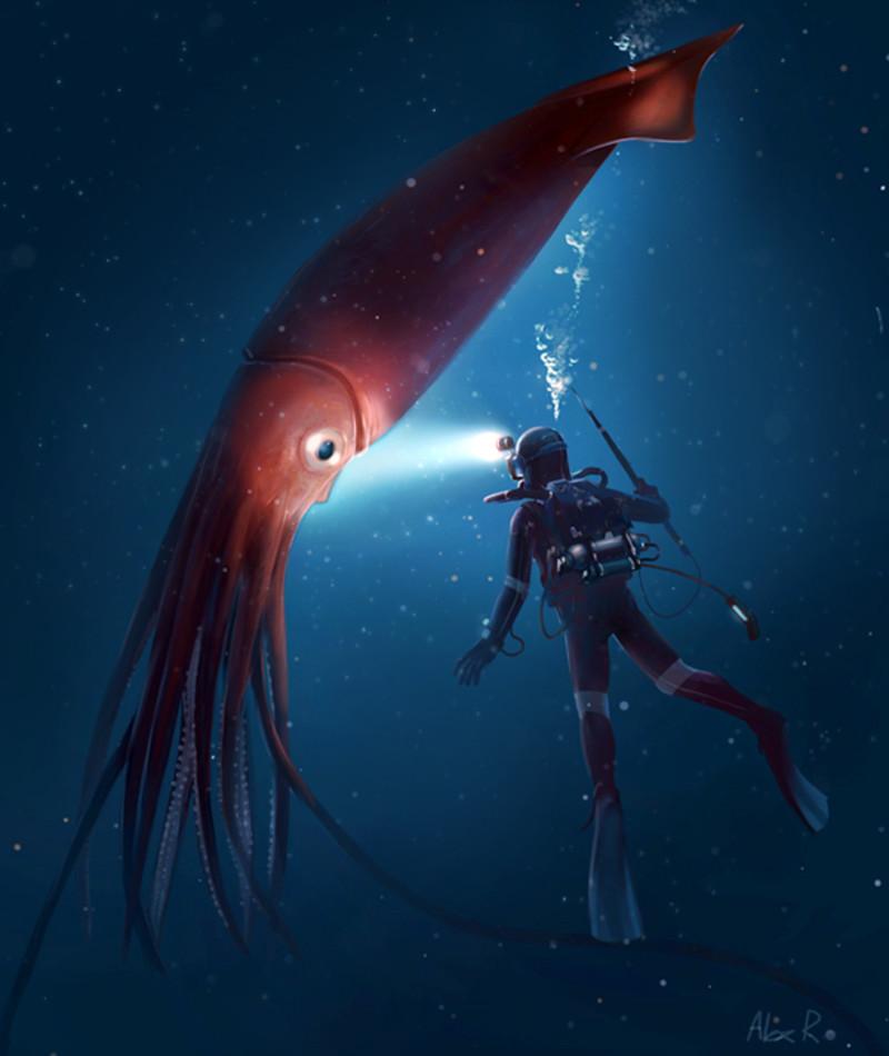 alex ries life squid - Megalodon Dev Köpekbalığı Canlanıyor mu? (Teoriler ve Belgeler)