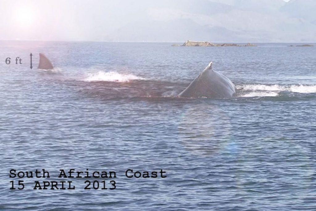 mega 1024x683 - Megalodon Dev Köpekbalığı Canlanıyor mu? (Teoriler ve Belgeler)