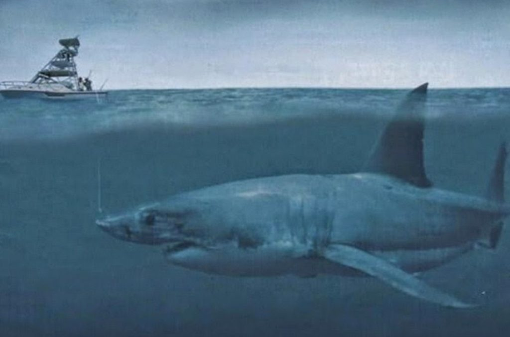 megalodon24 1024x677 - Megalodon Dev Köpekbalığı Canlanıyor mu? (Teoriler ve Belgeler)