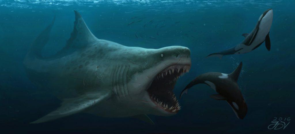 megalodon by josedalisayv da7ya6q 1024x466 - Megalodon Dev Köpekbalığı Canlanıyor mu? (Teoriler ve Belgeler)