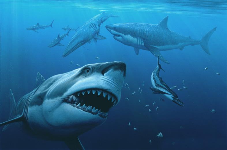 megatooth rising sample - Megalodon Dev Köpekbalığı Canlanıyor mu? (Teoriler ve Belgeler)