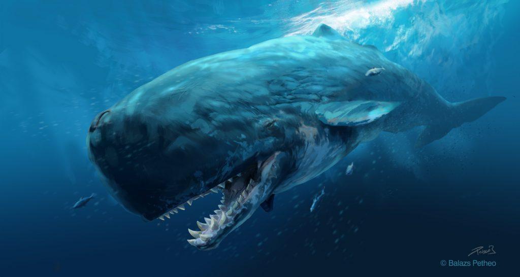 prehistoric mammals   livyatan melvillei by balcsika d79x53f 1024x546 - Megalodon Dev Köpekbalığı Canlanıyor mu? (Teoriler ve Belgeler)