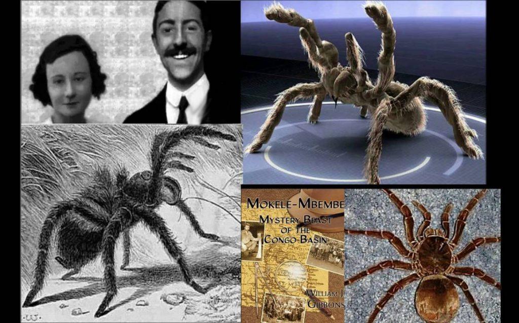 maxresdefault 1 1024x637 1024x637 - Kongo'nun 1,5 Metrelik Dev Örümcekleri