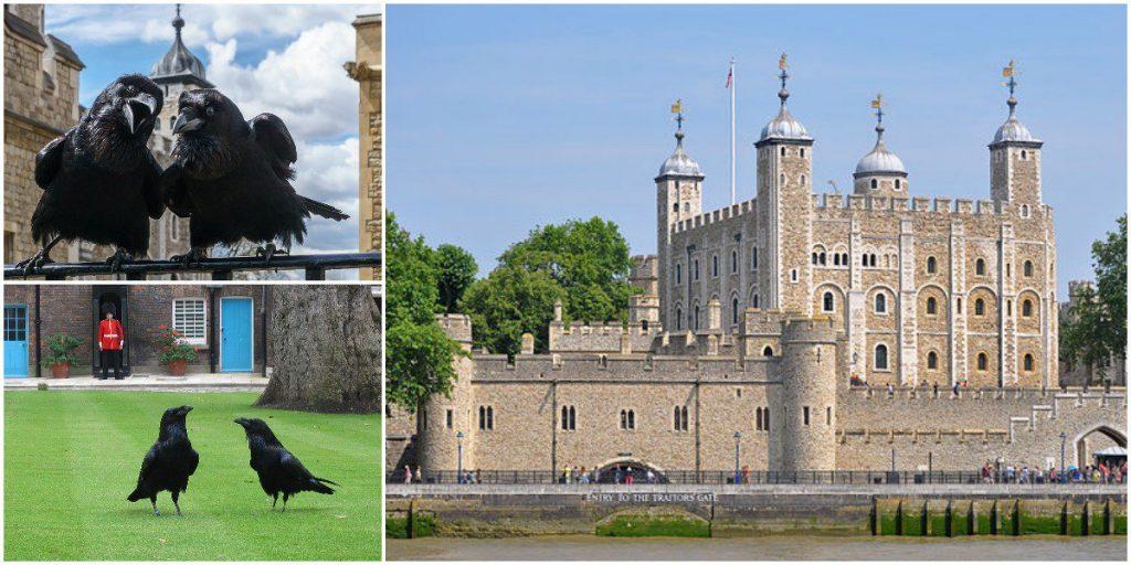 pjimage 1 1 1024x512 - Kraliyet Sarayının Londra Kulesi Kuzgunları