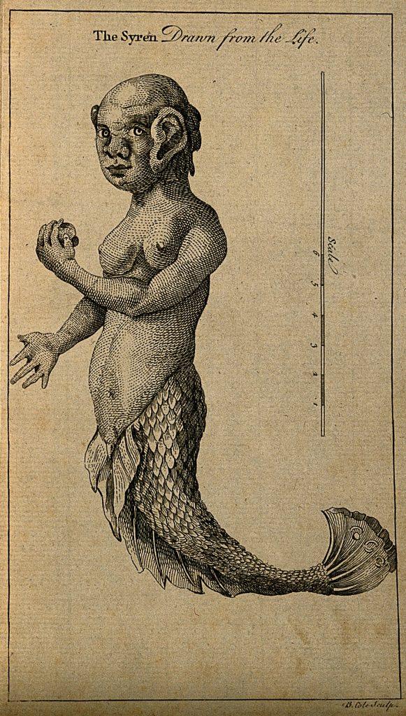 A mermaid with measuring scale. Line engraving by B. Cole Wellcome V0007464ER 581x1024 - Denizkızlarının Gerçek Olduğu Bazı Tarihsel Kanıtlar Var Mı?