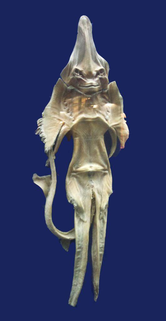 Mashhad museum PARI DARYAEI 531x1024 - Denizkızlarının Gerçek Olduğu Bazı Tarihsel Kanıtlar Var Mı?