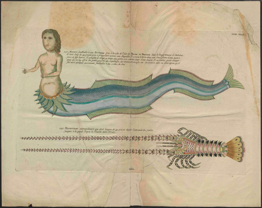 UB Utrecht   Louis Renard   1782   Natuurlyke Historie   page 267 1024x814 - Denizkızlarının Gerçek Olduğu Bazı Tarihsel Kanıtlar Var Mı?