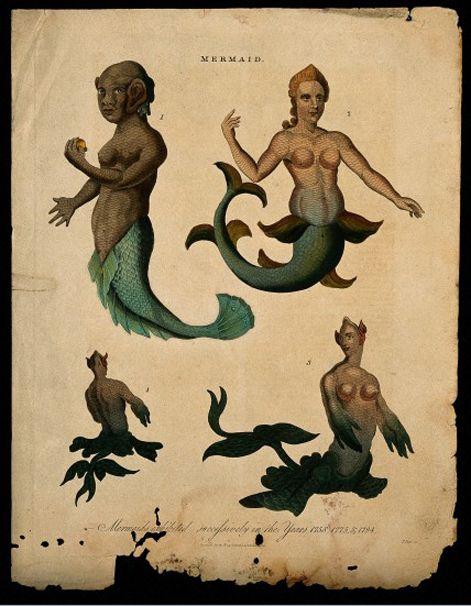 ba2e591bfbf4e7679ba8e8844a212f4e mermaids and mermen antique illustration - Denizkızlarının Gerçek Olduğu Bazı Tarihsel Kanıtlar Var Mı?