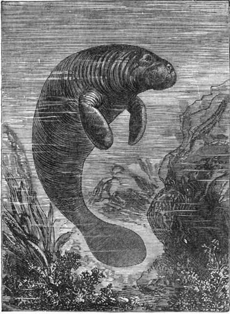fig02 017 - Denizkızlarının Gerçek Olduğu Bazı Tarihsel Kanıtlar Var Mı?