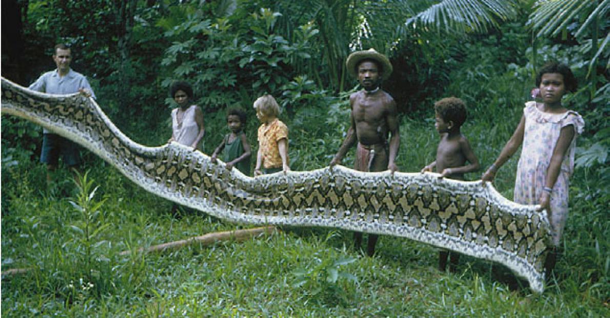 Agta python skin.adapt .1190.1 - Dev Yılanların Saldırısına Uğrayan Kabile Agta